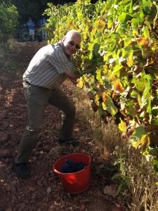Vindruer høstes